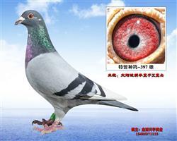 胡本-太阳城冠军回血-397