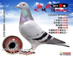 17兆佳公棚(春)决赛287名