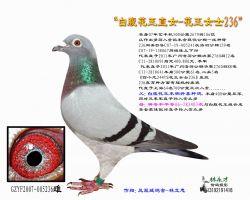 花王直女236