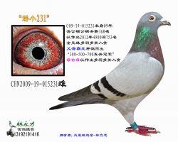 93 CHN2009-19-015231