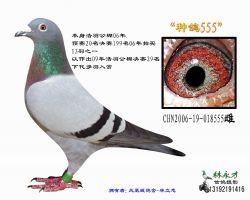 94 CHN2006-19-018555