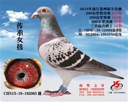 """""""传承女孩""""温州振宇公棚三关鸽王12名"""