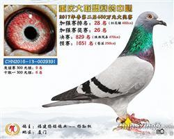 重庆大联盟赛鸽中心加强赛28名