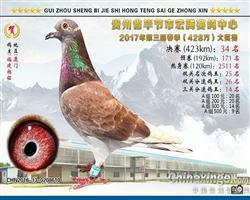 《已售》贵州宏腾赛鸽中心34名