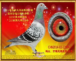 2014年中国国家信鸽公棚赛决赛4名