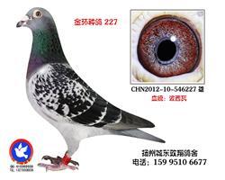 金环种雄227
