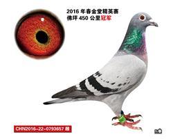 CHN2016-22-0793657
