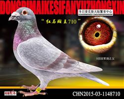 红石斑超级种雄710【高代种源】