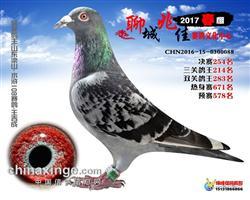 2017聊城兆佳春棚决赛254名