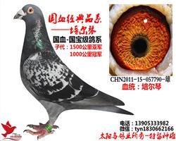 山东太阳鸟鸽业