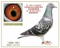 台湾林沐惠