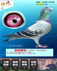 """""""公主直孙""""X98红狐直女"""