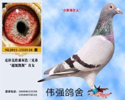 中华摄影伟强鸽舍