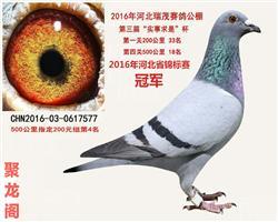河北省锦标赛冠军