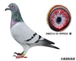 CHN2016-04-0999034