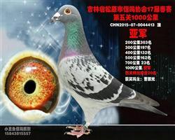 松原市信鸽协会赛季鸽