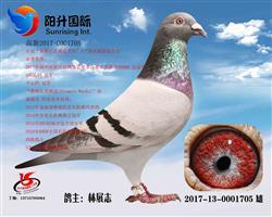 2017高新西线总冠军(供欣赏)