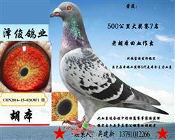 胡本3871