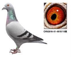 CHN2016-01-0015719