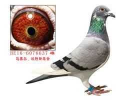 11883羽39名直子(波治国家赛)