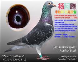 多利杨阿腾《天猛星霹雳火-秦明》
