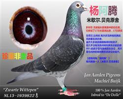 多利杨阿腾《天速星神行太保-戴宗》