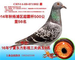 宁夏东方影视鸽王9名母亲