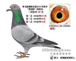 戈马利14年秋三关鸽王48名(已售)