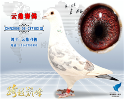 云鼎&银狐系