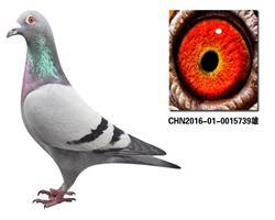 CHN2016-01-0015739