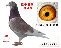 2005-01-142945副本