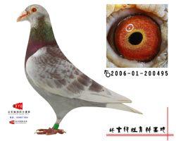 2006-01-200495雄副本