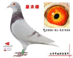 2006-01-527650副本