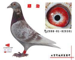 2008-01-020301副本