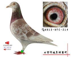 AU-2013-WFC-214雌副本