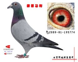 2009-01-195774副本