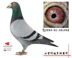 2004-01-301958雄副本