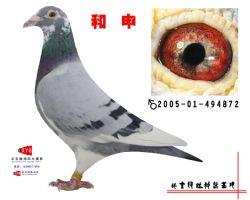 2005-01-494872副本