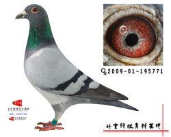 2009-01-195771雌副本
