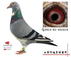 2013-01-431615雌副本