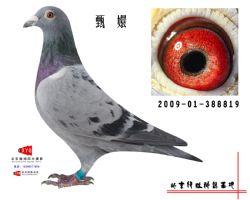 2009-01-388819副本