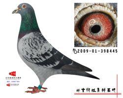 2009-01-398445雄副本