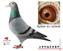 2009-01-929645雄副本