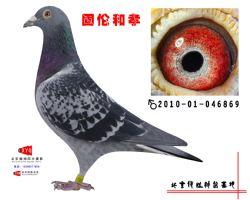 2010-01-046869副本