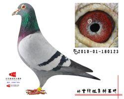 2010-01-180123雄副本