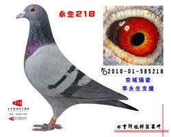 2010-01-585218副本