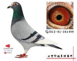2012-01-261499雌副本