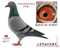 2012-01-915837雌副本