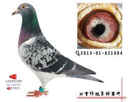 2013-01-621004雌副本
