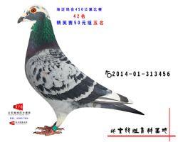 2013-01-941470雄副本